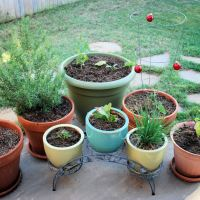 Gardening: Grow Your Own Garden