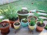 Gardening: Grow Your OwnGarden
