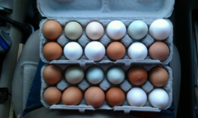 farm fresh pastured eggs