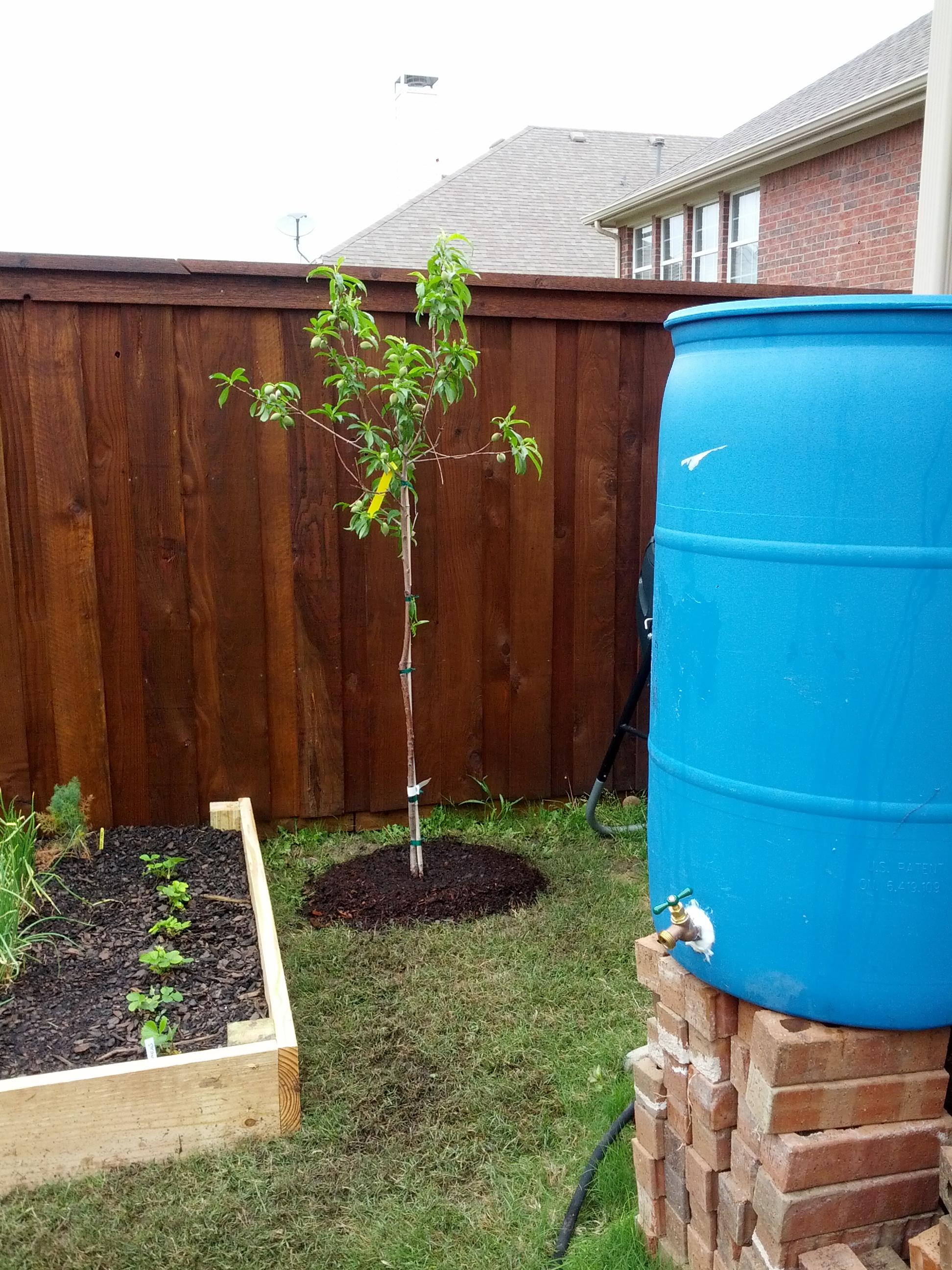 Earth Day 2013 Making A Rain Barrel Crunchy Hot Mama