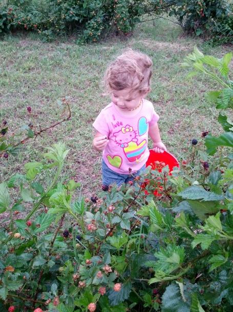 Emma picking blackberies