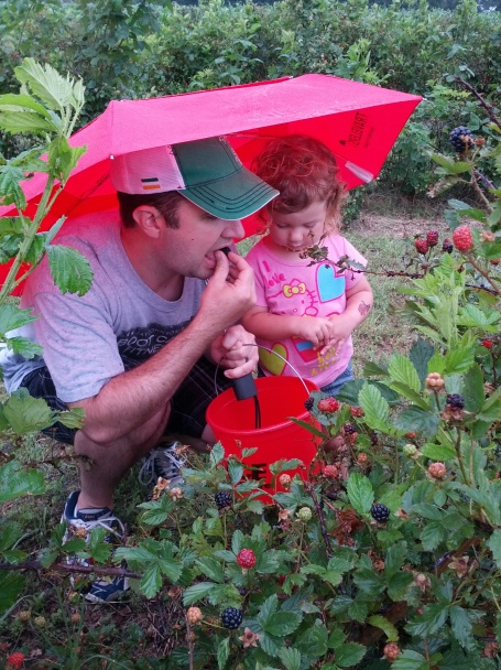 having a taste of fresh picked blackberries