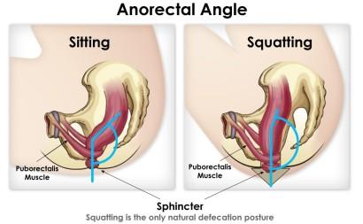 squatting angles